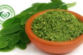 Moringa Bitkisi'nın 27 Faydası! İnanılmaz Şifalı 'Mucize Ağacı'