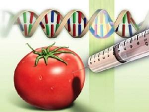 probiyotikler ve GDO'lu gıdalar