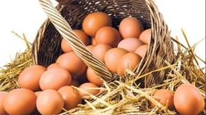 Şeker bağımlılığı serbest gezen tavuk yumurtası