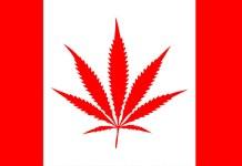 Kanada'da Keyif İçin Esrar (Kenevir) Kullanımı ve Üretimi Yasallaştı