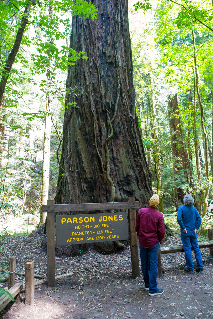 Northern California Armstrong Redwoods State Natural Reserve, Parson Jones