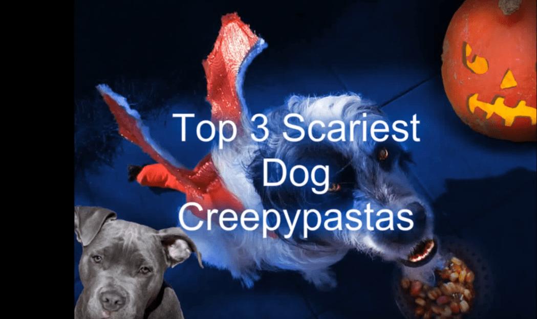 muxe tv creepy countdown top 3 scariest dog creepypastas