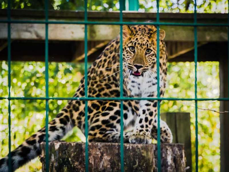 North Bihar to get its first Zoo at Forbesganj
