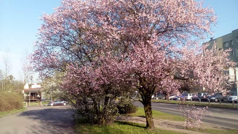 Wiosna 1