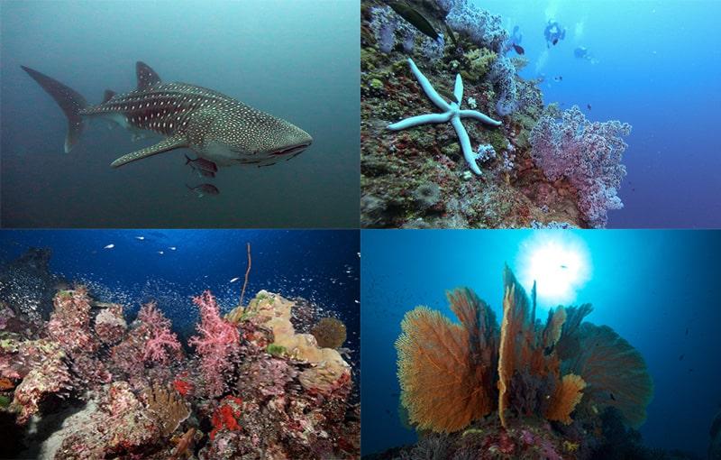 Thailand Liveaboard - Scuba Diving Impressions