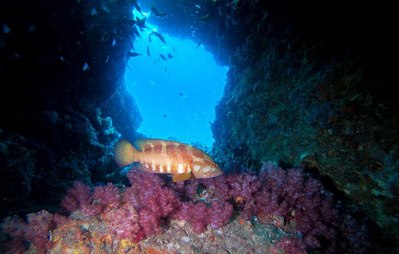 Thailand Diving Liveaboard South Andaman MV Giamani