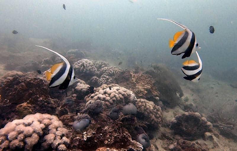 Diving Pileh Wall - Phi Phi Island Diving with MV Giamani
