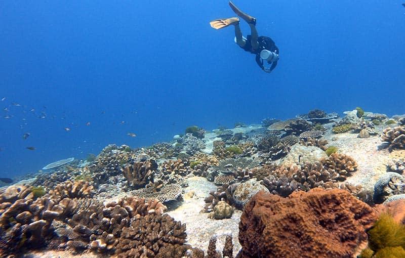 Top Similan Islands Dive Sites MV Giamani
