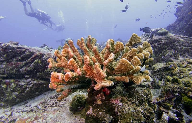 Diving Thailand Liveaboard MV Giamani