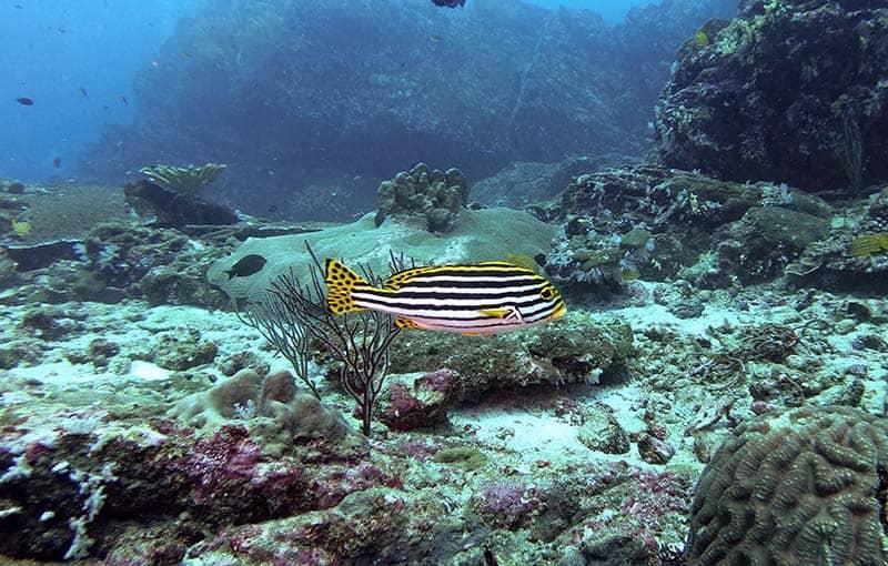 Koh Bon Thailand Diving MV Giamani