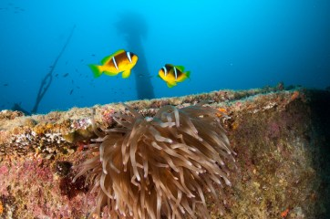 Clow Fish and Anemone
