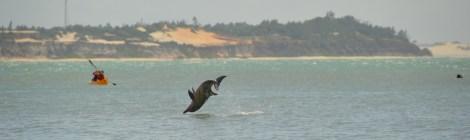 Com os Golfinhos em Pipa - RN