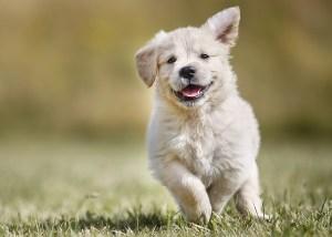 Pet Insurance: Do You Need It?