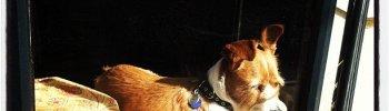 Another #Savannah window dog (Taken with instagram)