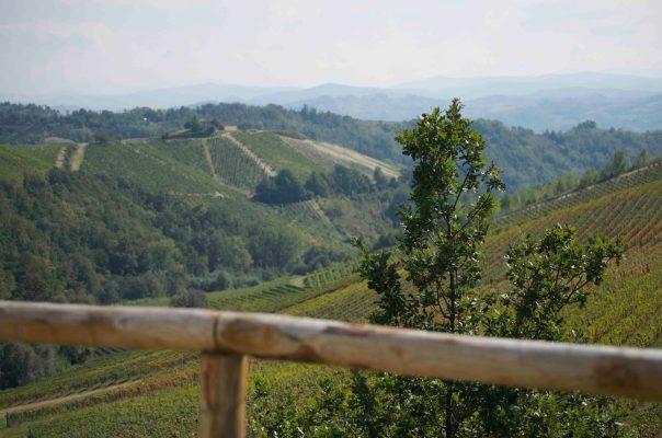 Vineyards in Piemonte
