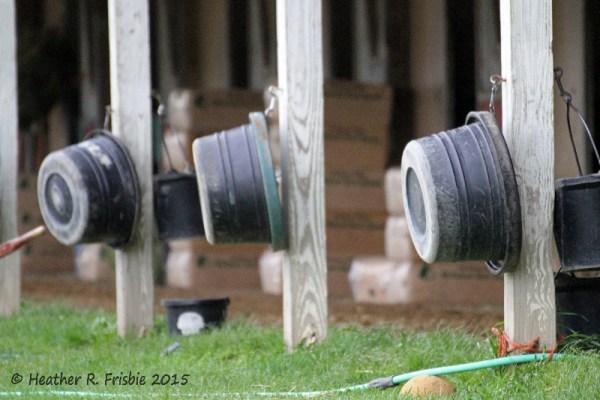 Trainer Gary Scherer's well kept barn on the Canterbury backside