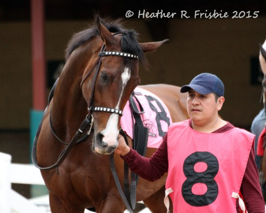 Note D'Oro in the Canterbury Park paddock prior to the HBPA Distaff earlier this summer