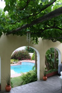 Growing Grapes On A Pergola