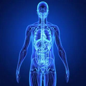 Organi del Corpo Umano: Cosa e Quali sono? Suddivisione in Apparati