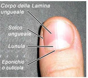 Crema per pelle di mani da un fungo di unghie