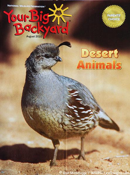 Your Big Backyard Magazine Subscription