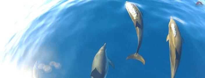 Location Voilier My Sail croisiere Mediterranee Ile des Embiez Ete dauphin