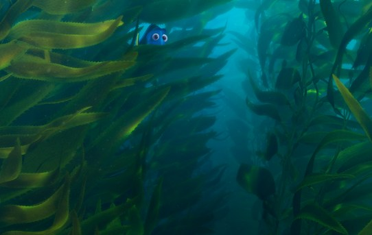 """Finding Dory"" theatrical teaser seaweed poster."
