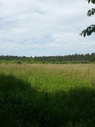 Wiesen, Wälder und angelegte Wege