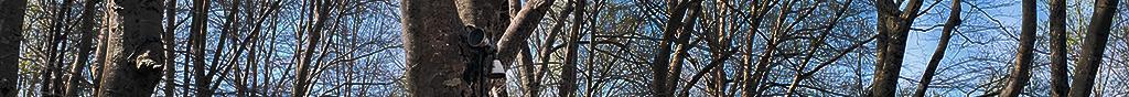 Hidden Flood Lights mounted in a Beechwood Trees