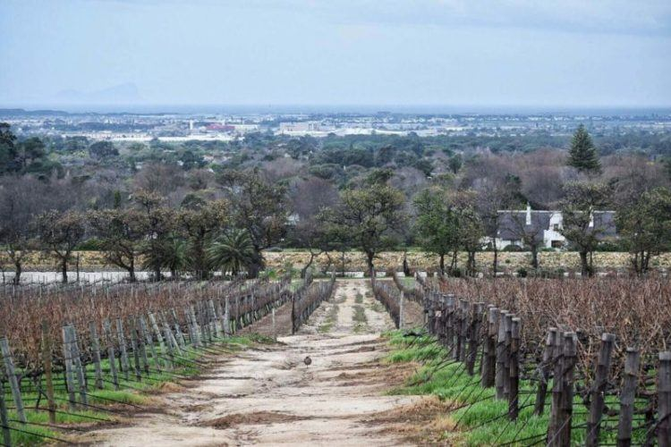 One of the nicest things to do in Cape Town is doing a wine tasting tour at Groot Constantia