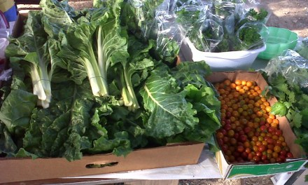 Island Greens – Sustaining Anguilla from the Ground up