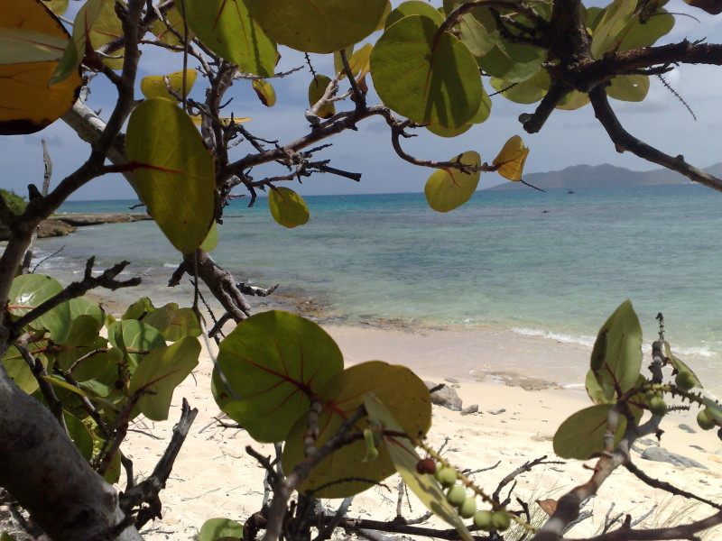 View of the beach through sea grape leaves