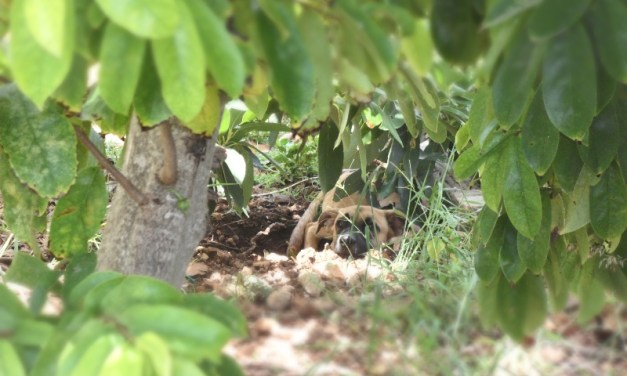 Animals in my Backyard – My Anguilla Experience!