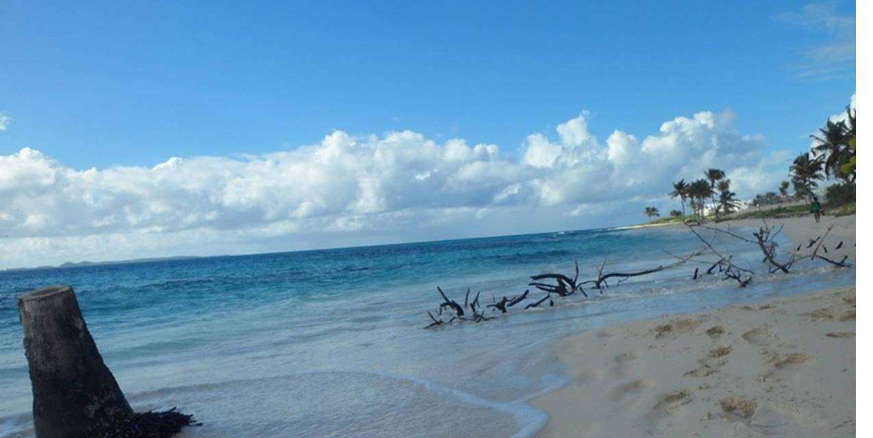 On the Beach with the Anguilla National Trust – Part Two