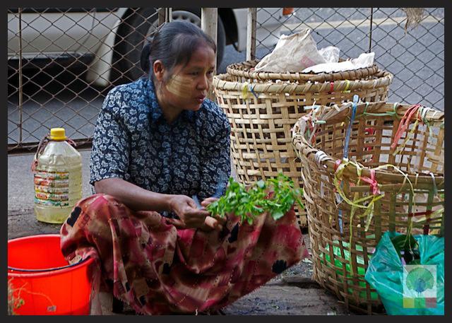 Natural Medicines Stall - Yangon - Myanmar (Burma) 4