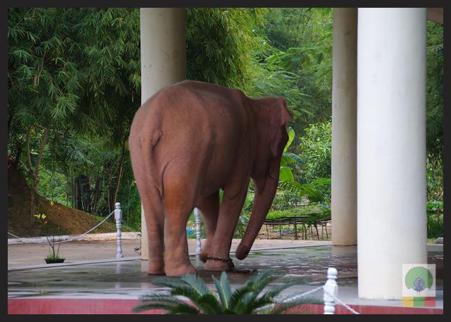 Royal White Elephant Garden - Hsin Hpyu Daw Park - Insein Township - Yangon - Myanmar (Burma) 6