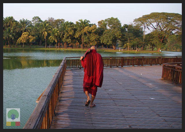 Kandawgyi Lake - Monk walking teak bridge - Yangon - Myanmar (Burma)