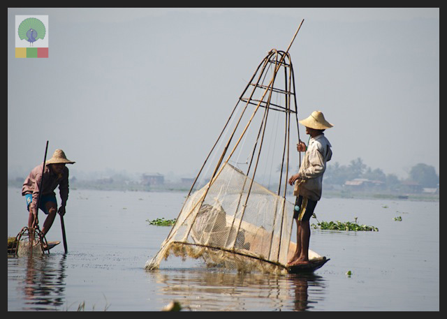 One leg paddling fisherman - Inle Lake - Myanmar (Burma) 8