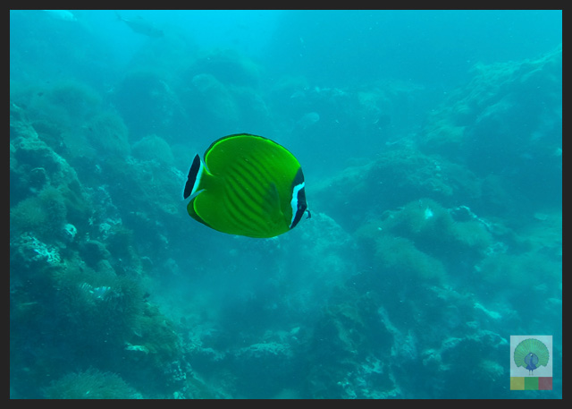 Diving-in-Ngapali-beach-Myanmar-Travel-Essentials-10