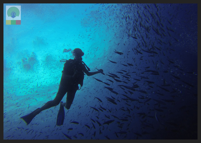 Amazing Diving Sites in Myanmar: Ngapali Beach