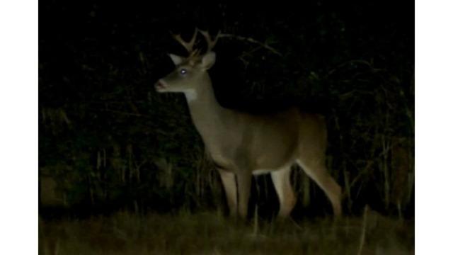 deer collisions_1546918201310.PNG_66808044_ver1.0_640_360_1548694482536.jpg.jpg