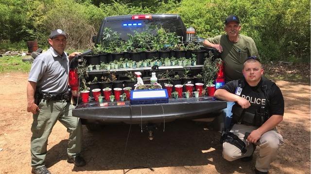 100+ marijuana plants seized during Arkansas drug bust