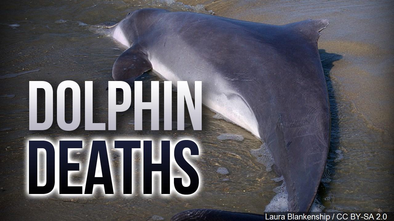 Dolphin Deaths_1560536690474.jpg.jpg