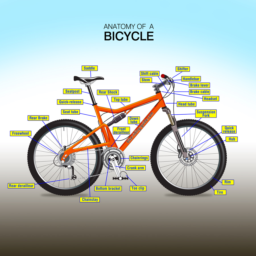 Anatomy Of A Bicycle Infographic My Artwork Studio