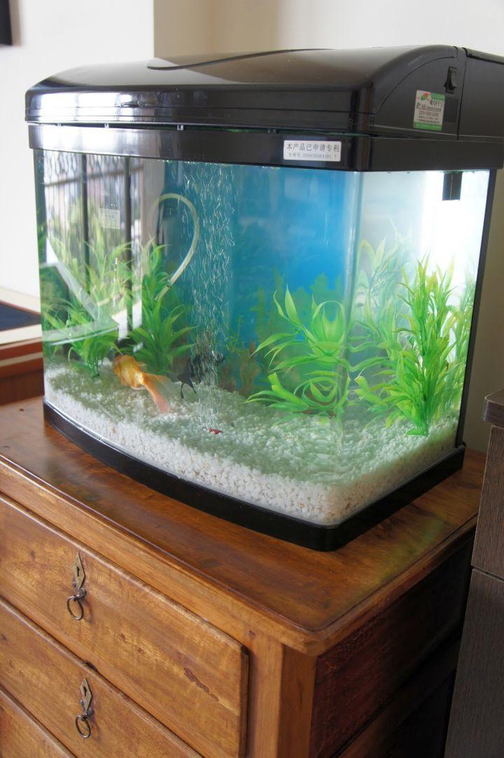 17 Pleasing Contemporary Fish Tank Ideas