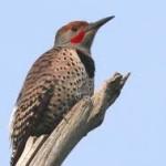 Group logo of Ballard For The Birds