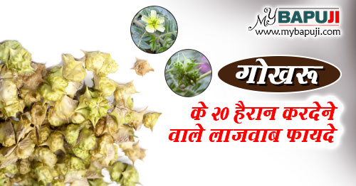Gokhru ke Fayde aur Nuksan in hindi