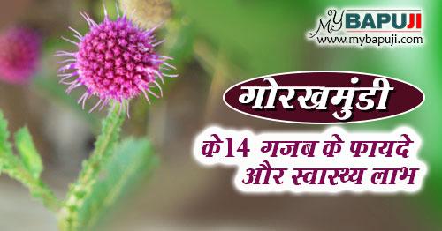 gorakhmundi ke fayde labh gun upyog aur nuksan in hindi