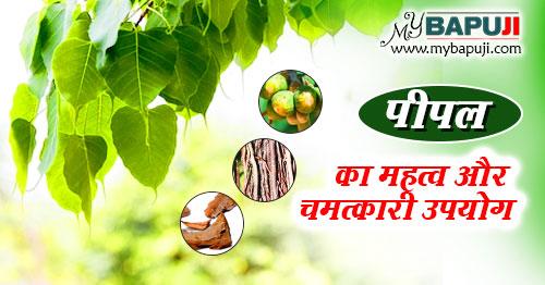 pipal ka mahatva Fayde Gun aur Upyog in hindi