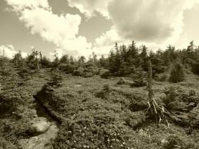 Alpine bog